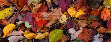 121202title-fallen-leaves.jpg