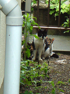 060528three-cats.jpg