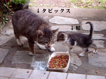 060528two-cats.jpg