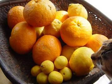 080429citrus-fruits.jpg