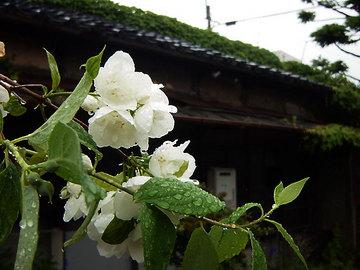 080608toyonotsuru-shuzo3.jpg