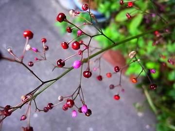081012kobe-garden07.jpg