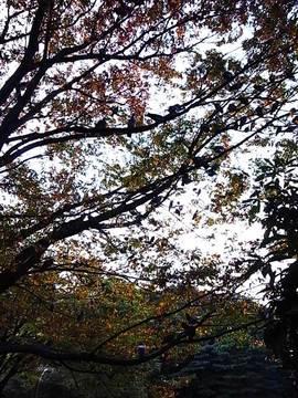 081029pigeon-wood3.jpg