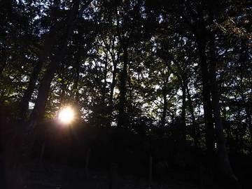 081101woods.jpg