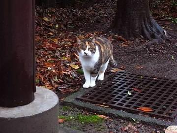 081128ryokudo-cat1.jpg