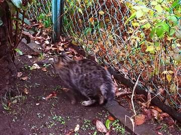 081128ryokudo-cat3.jpg