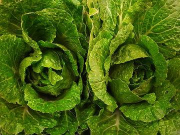 090223chinese-cabbage.jpg