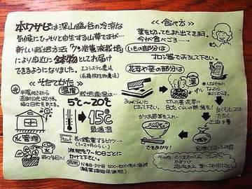 090302hon-wasabi3.jpg
