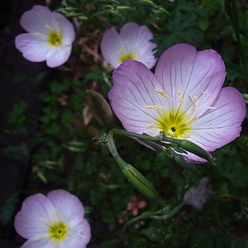 090421flower.jpg