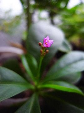 090930coral-flower1.jpg