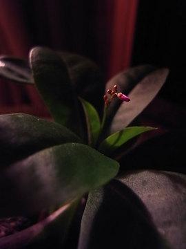 090930coral-flower3.jpg