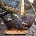 100110tama-zoo07.jpg