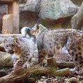 100110tama-zoo12.jpg