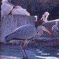 100110tama-zoo21.jpg