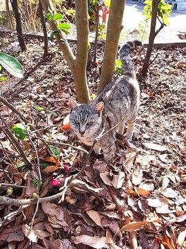 100121ryokudo-cat1.jpg