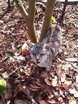 100121ryokudo-cat2.jpg