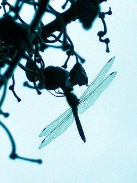 100928dragonfly.jpg