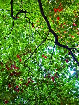 101112autumn-leaves1.jpg