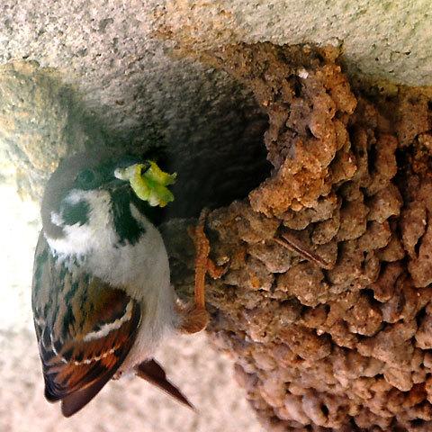 120504sparrow.jpg