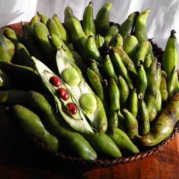 120521broad-beans1.jpg