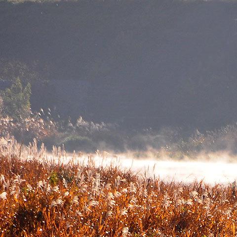121129river-fog.jpg