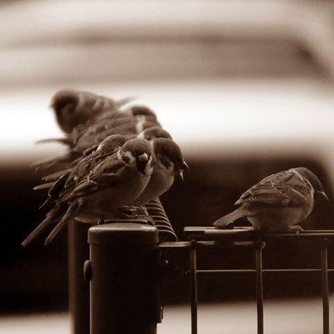 121205sparrows.jpg