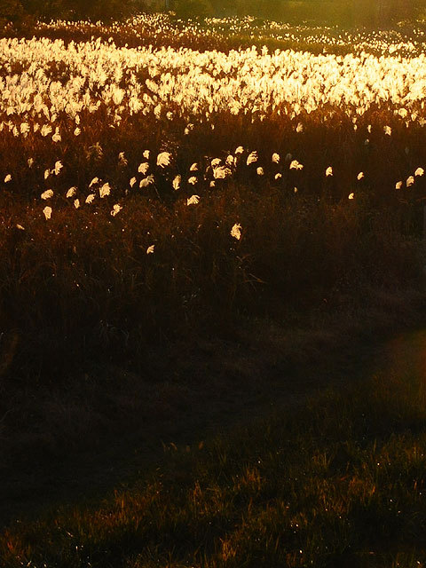 131121grass-field.jpg