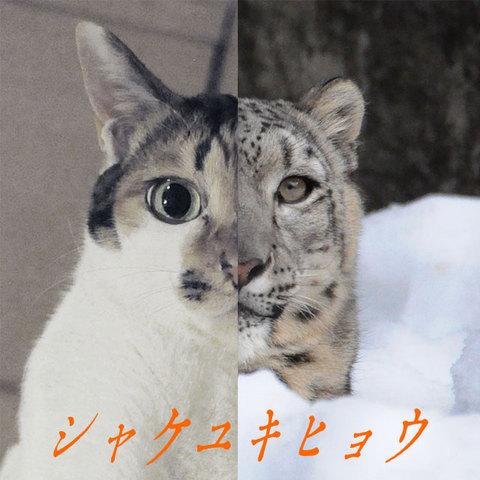 シャケユキヒョウ.jpg
