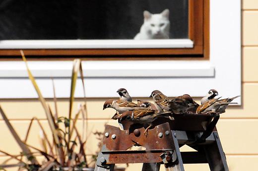 140309birds&cat.jpg
