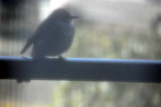 140323bird.jpg
