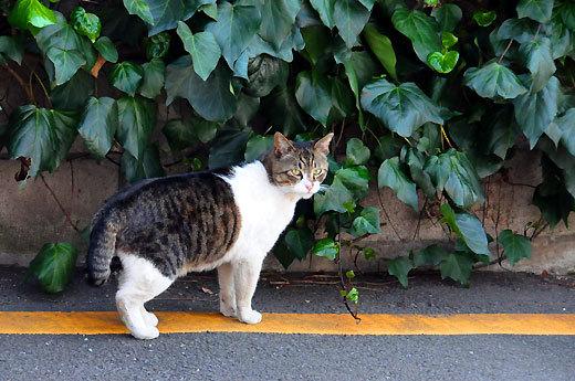 140409kawasakidaishi09.jpg