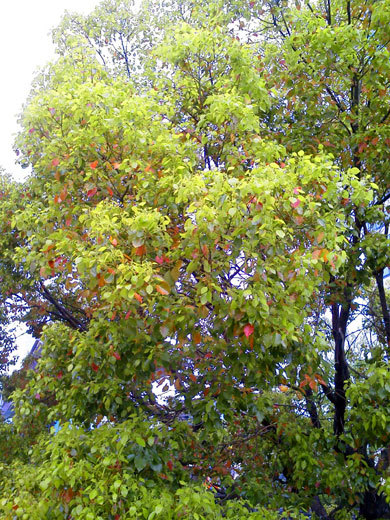 140421camphor-tree2.jpg