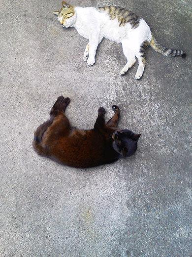 140523cats.jpg