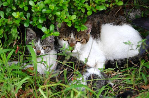 140723cats2.jpg