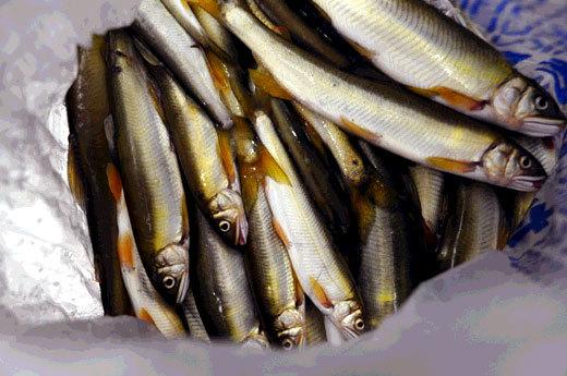141101sweetfish.jpg