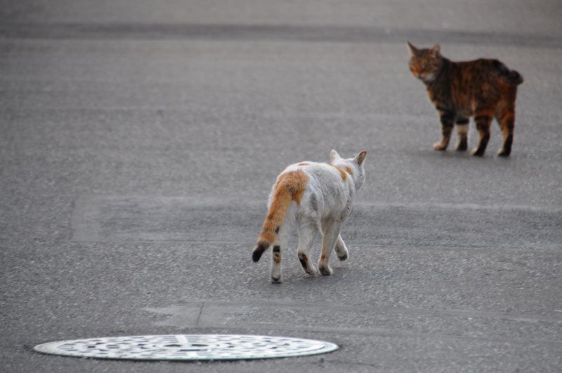 141224cats.jpg