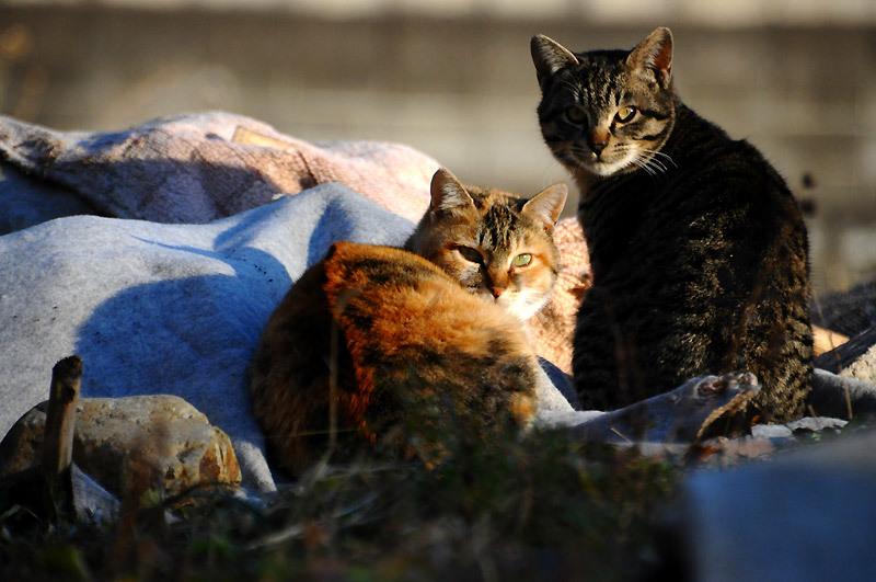 150107cats.jpg