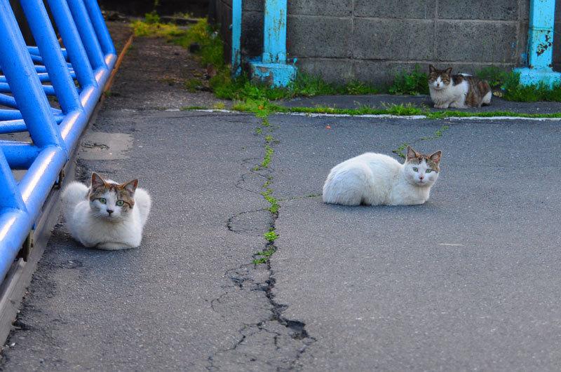 150429cats.jpg