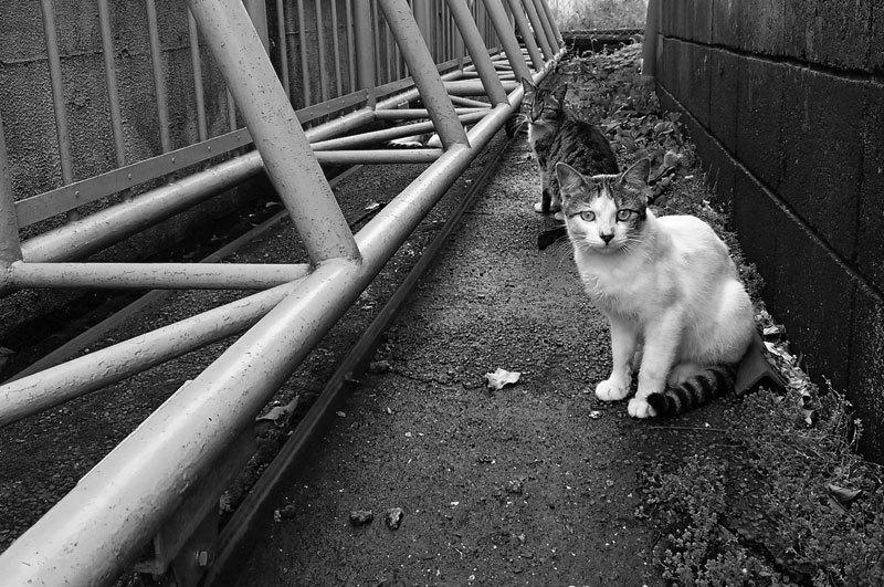 150704cats.jpg