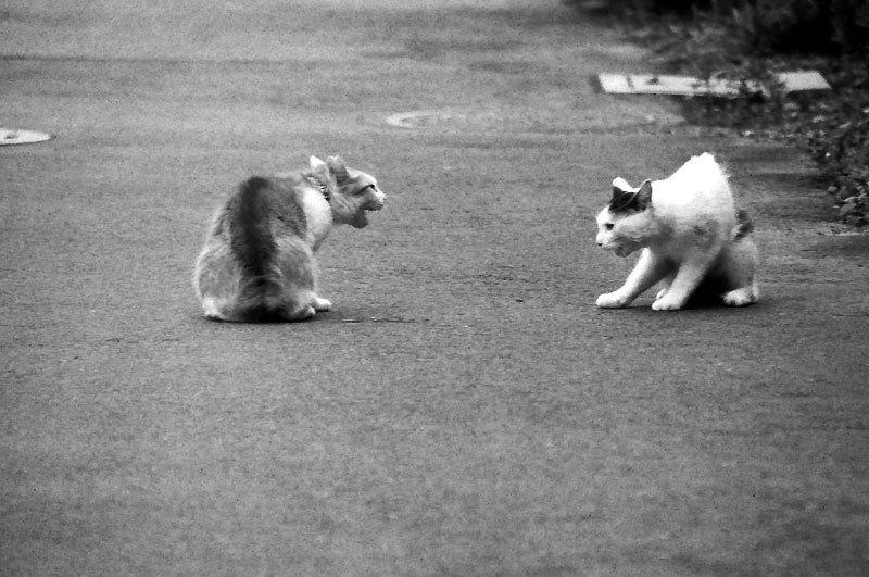 150915cats.jpg