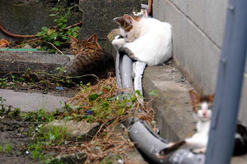 151006cats.jpg