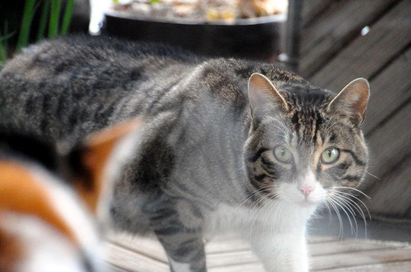160117cats.jpg