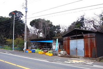 110220miura4.jpg