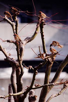 110320sparrow.jpg
