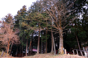 110325kumano-shrine08.jpg
