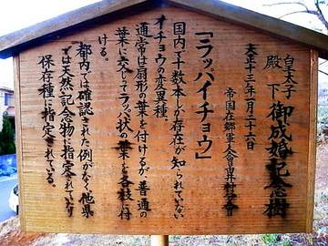 110325kumano-shrine10.jpg