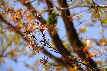 110424hana-matsuri4.jpg