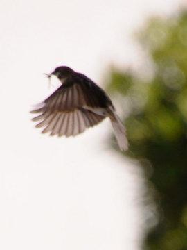 110427sparrow1.jpg