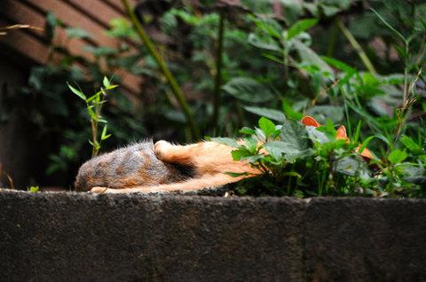 110727cats1.jpg