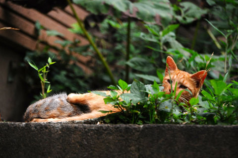 110727cats2.jpg
